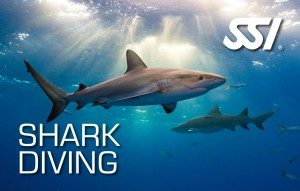 curso-buceo-SSI-shark-diving